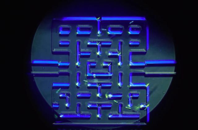 Researchers create a microscopic game of 'Pac-Man'