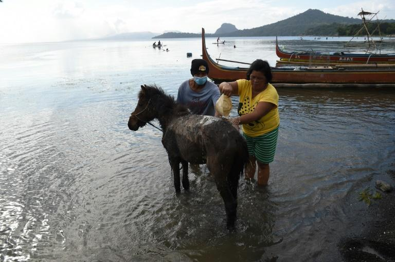 Residents living at the foot of the volcano washed their horses, covered with volcanic ash, after rescuing them from their homes and transporting them to Balete town in Batangas province south of Manila (AFP Photo/Ted ALJIBE)