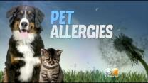 Seen At 11: Spotting And Treating Pet Allergies