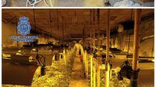 Hallan en Toledo la mayor plantación subterránea de marihuana, de 300 metros