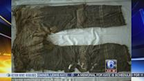 VIDEO: Scientists may have found the oldest trousers