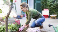 Que tal cuidar do jardim e plantar essas frutíferas em casa?
