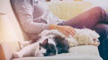 6 historias conmovedoras sobre como las mascotas alivian la enfermedad