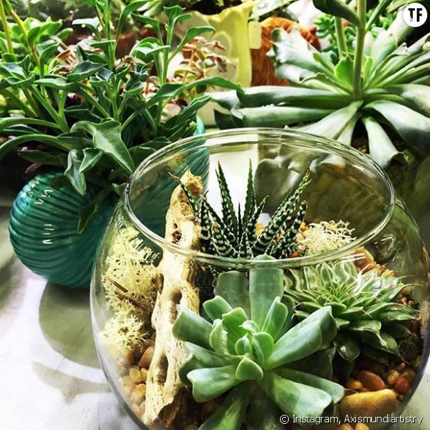 green diy comment faire un joli terrarium. Black Bedroom Furniture Sets. Home Design Ideas