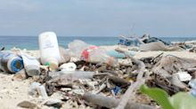 Seabirds found with more than 250 pieces of plastic lodged in their stomachs