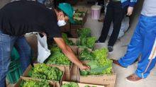 Mutirão auxilia agricultura familiar e pessoas de baixa renda durante a pandemia