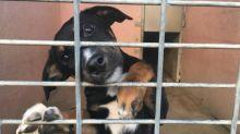 """Coronavirus : """"Nous allons avoir des milliers d'animaux qui seront euthanasiés"""", s'alarme le président de la SPA"""
