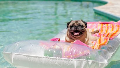6 top-rated buys to keep pets cool this summer