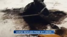 Young Albertans save horse trapped in ice