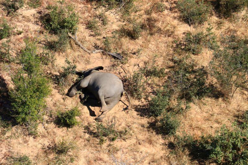 Botswana top vet defends investigations into unexplained elephant deaths