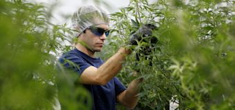 Canopy Growth takes a hit from weak earnings