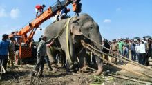 Elephant dies in captivity after killing villagers