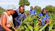 Southern African maize munching pest is South American invader: experts