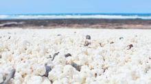 Conheça a praia onde a areia parece pipoca