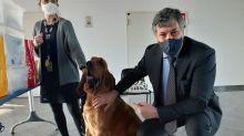 Covid, all'aeroporto di Cuneo al via il progetto cani anti-virus