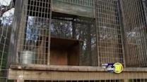 New details behind Cat Haven's fatality