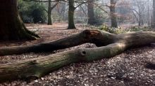 Tree of the week: 'This fallen elm looks like a Man Ray nude'