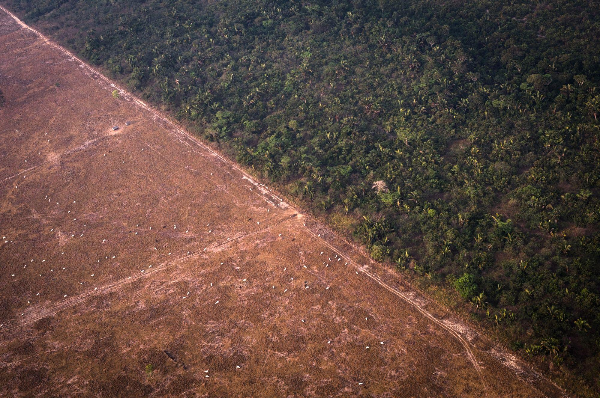 Record deforestation in the Amazon rainforest confirms official Brazilian data