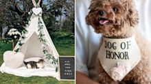 Hochzeit mit Haustier: Ringträger mal anders