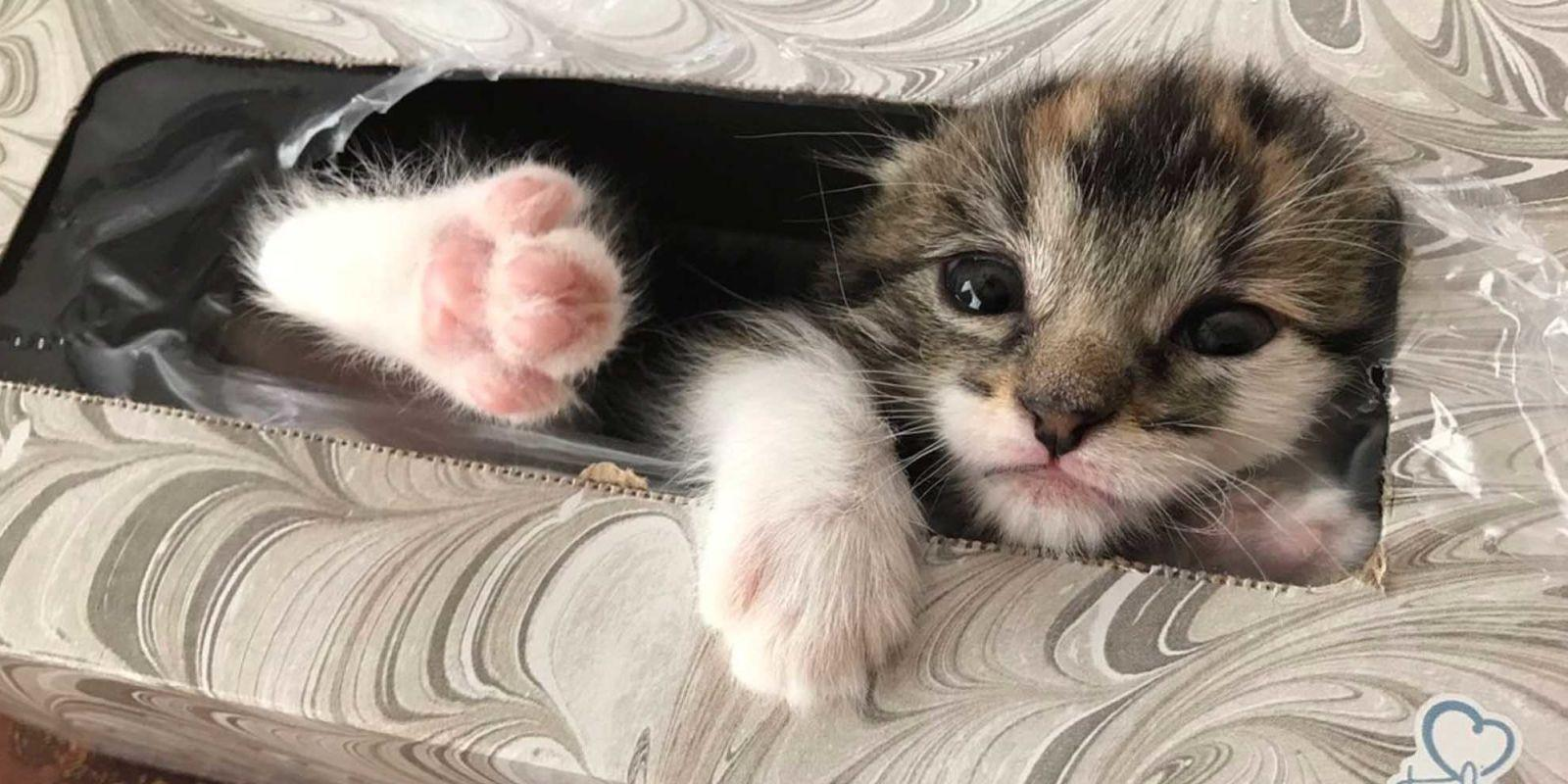 This Girl Found Her Lost Baby Kitten in the Most Adorable Hiding Spot