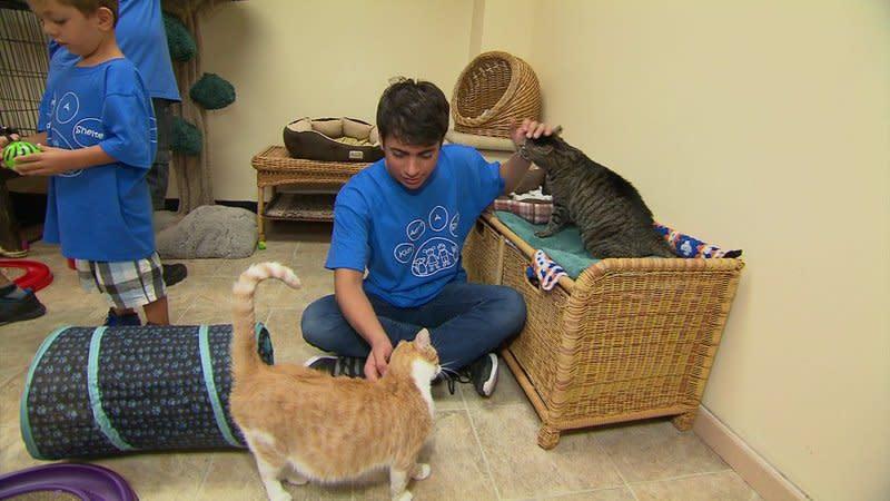 Non Profit Animal Shelters Long Island