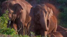 Elephants' 500km-trek across China baffles scientists