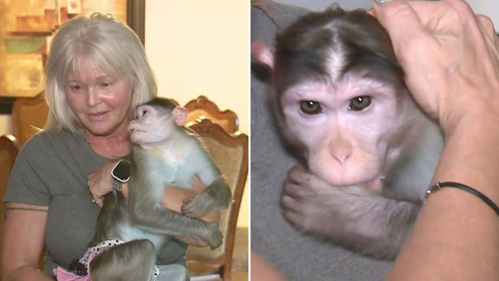 Woman fights to keep her three emotional support monkeys