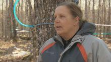 Maple syrup farmers face 3rd straight early season