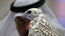 """Falken als """"Begleittiere"""" an Bord eines Flugzeugs gehen viral – aber hinter der Geschichte steckt mehr"""