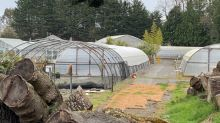 Victoria helps with food production for 1st time since WWII, due to COVID-19 demand