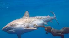 Tiburón le arranca la pierna y se vuelve defensor de estos animales