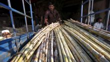 Sugar cane crushing gains momentum in India: trade body