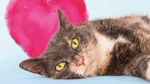 ¿Soltero en San Valentín? Hogar de perros y gatos ofrece pasar el día más romántico del año con sus animales