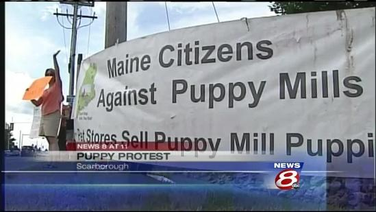 Puppy mill protesters target Scarborough pet shop