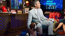 Andy Cohen rehomed beloved dog after 'incident' with son: 'A piece of my heart is gone'