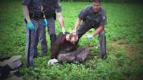 Multiple NY Prison Officials Suspended After Escapee David Sweat Talks