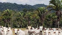JBS comprou gado ilegal na Amazônia, diz Anistia Internacional