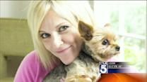 Tiny Dog Caught in Bizarre Kidnapping and Extortion Plot