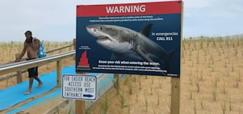 Sharks multiply off Cape Cod beaches