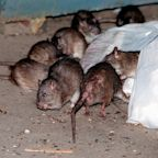 A New York man with terrible luck fell into a sinkhole teeming with rats and was trapped for a half hour