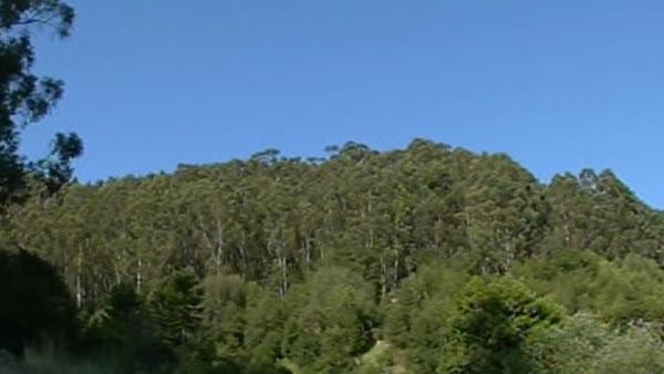 FEMA to fund removal of trees from East Bay Hills