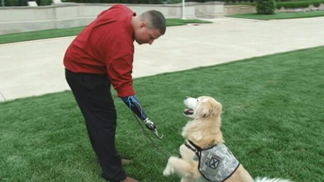 Service Dogs Training to Help Those in Need