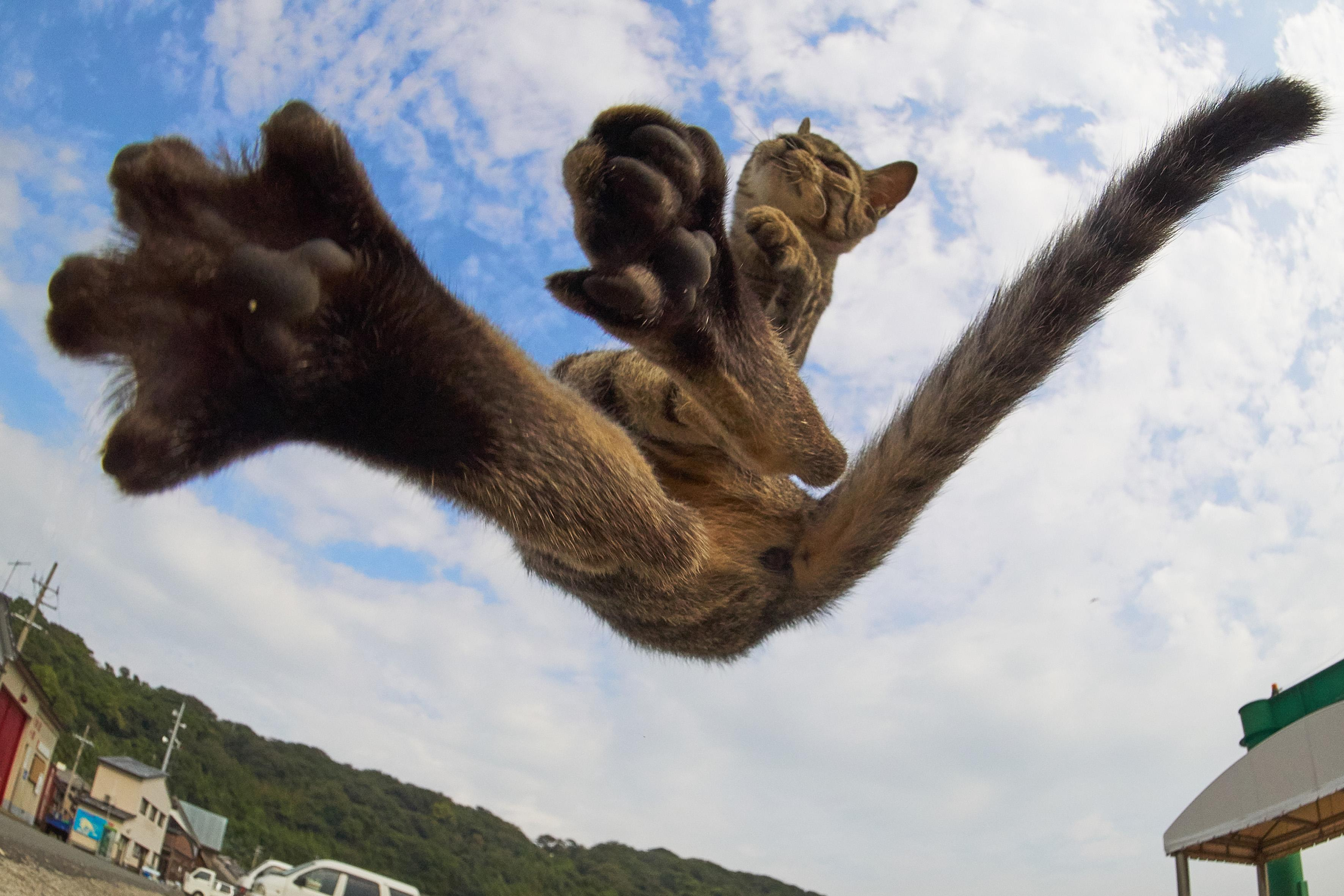 <p><span>This talented photographer has managed to snap a group of mortal tomcats in a variety of high-flying kung fu poses. </span>(Photo: Hisakata Hiroyuki/Caters News) </p>