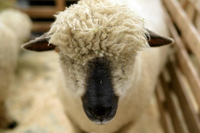 Scotland's National Sheep Association says farmers are trained and given animal welfare guidelines
