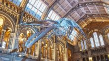 Natural History Museum unveils Dippy's replacement, a giant blue whale called Hope