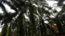 Vinculan la muerte de reporteros indonesios con su trabajo sobre el aceite de palma