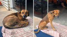 Após morte do dono, cachorro se recusa a sair da frente do hospital