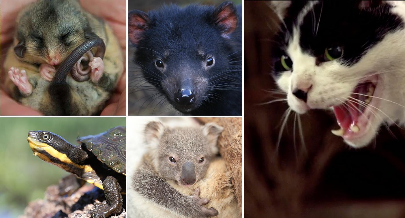 Environment minister reveals priorities to stop Australian animals becoming extinct
