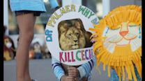 Zimbabwe calls for extradition of Cecil the lion's killer
