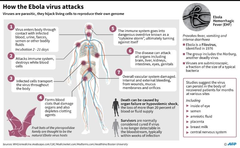 The Ebola virus is highly contagious and has an average fatality rate of around 50 percent (AFP Photo/)